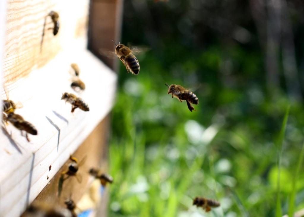 Der Honig kann kommen